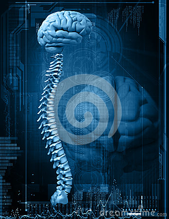Free Brain And Spine Royalty Free Stock Images - 28761469