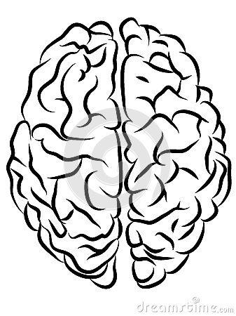brain contours royalty free stock photos image 34359238