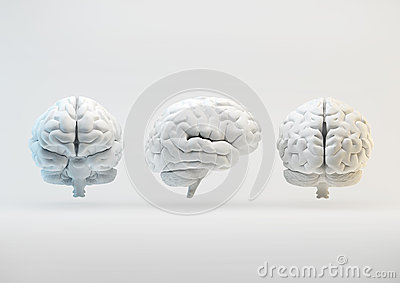 Brain from different angles