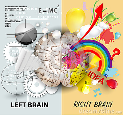 Free Brain Functions Royalty Free Stock Images - 49042979