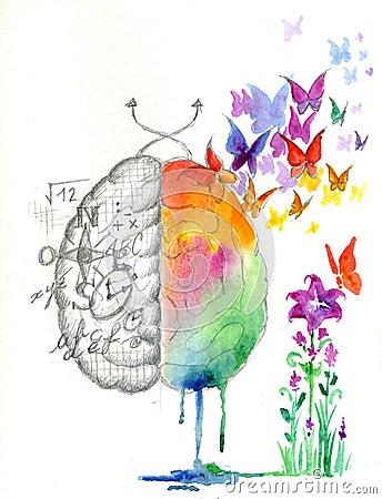 Free Brain Hemispheres Watercolored Artwork Stock Images - 46382784