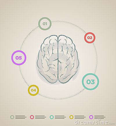 Brain Infographic Template Stock Images - Image: 33769434