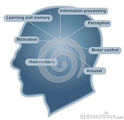 Brain main function