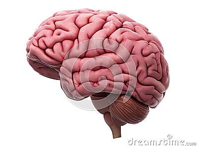 The brain Cartoon Illustration