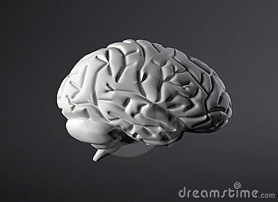 Brain model side view