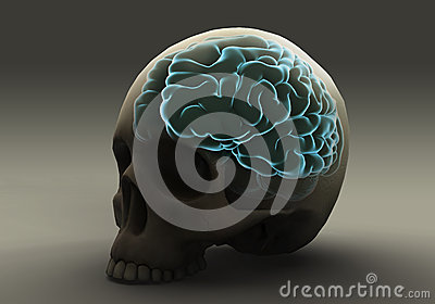 Brain Within the Skull