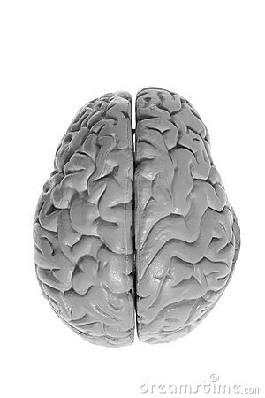 Brain Specimen Stock Photos - Image: 20521043