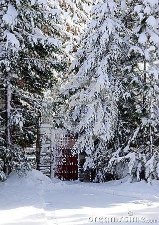 Brama śniegu lasu