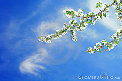 Branch of apple on blue sky