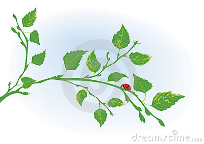 Branch of birch and ladybird