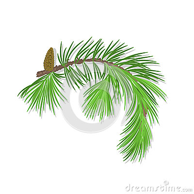 Branch of Christmas tree with pine cone vector illustration