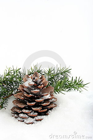 Branch and cone on white snow