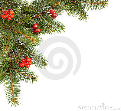 Branch of fir