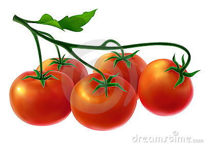 Branch with fresh tomatoes