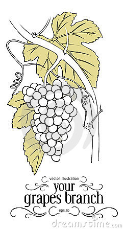 Branch Of Grapes Stock Photos - Image: 18532703