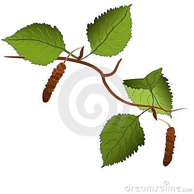 Free Branch Of A Birch Tree Stock Photos - 6430533