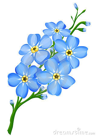 Free Branch Of Blue Forget-me-not Flowers Isolated Stock Photography - 8598902