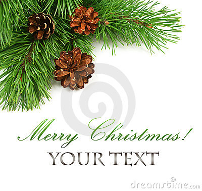 Free Branch Of Christmas Tree And Pine Cones Stock Image - 21349391