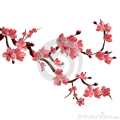 Free Branch Of Rose Blossoming Sakura . Japanese Cherry Tree. Vector Isolated Illustration On White Background Stock Photo - 68856660