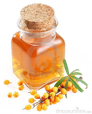 Free Branch Of Sea-buckthorn And Oil Stock Photography - 17497862