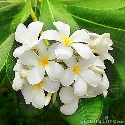 Free Branch Of Tropical Flowers Royalty Free Stock Photography - 22381457