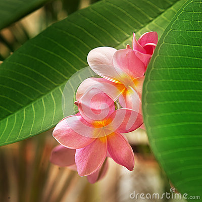 Free Branch Of Tropical Flowers Stock Photography - 26808672