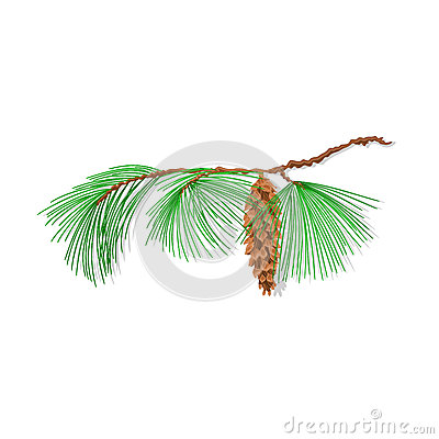 Branch pine Christmas tree vector