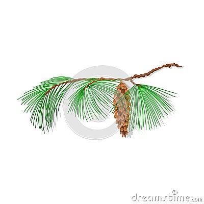 Branch pine Christmas tree vector