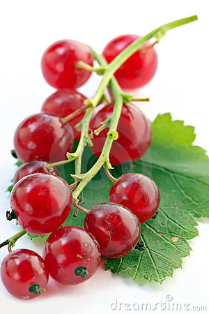 Branch of red currant on white background