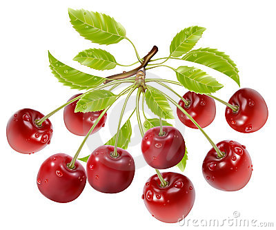 Branch of ripe cherries with water drops and leave