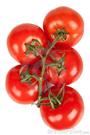 Branch of tomatoes with water droplets isolated
