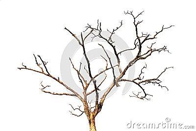 Branche d 39 arbre morte d 39 isolement image libre de droits for Comment entretenir un citronnier