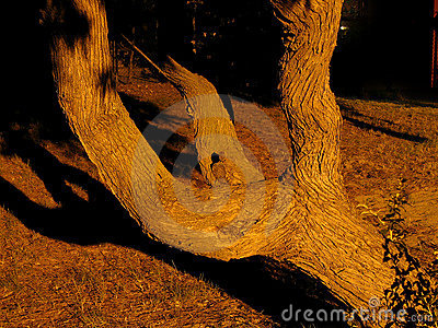 Branched Tree