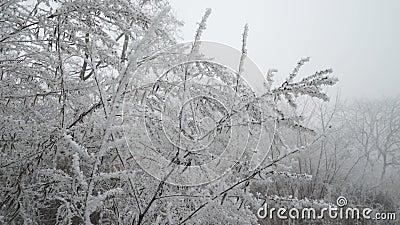 Branchements blancs gelés horizontal de forêt de jour ensoleillé banque de vidéos