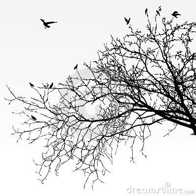 Free Branches Stock Photography - 8946592