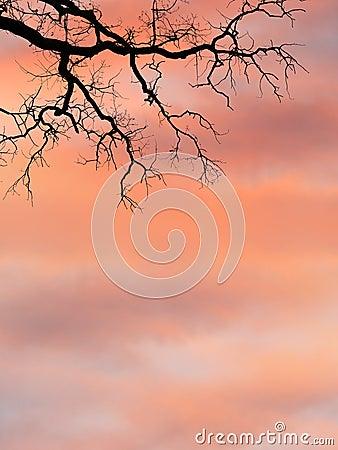 Branches against sunrise sky