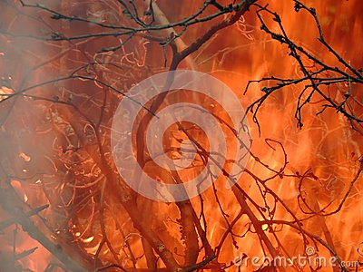 The branches in the burning pyre