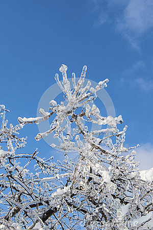 Branches covered with ice in sunlight