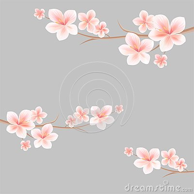 Free Branches Of Sakura With Light Pink White Flowers On Light Grey Background. Apple-tree Flowers. Cherry Blossom. Vector Stock Photography - 79980752