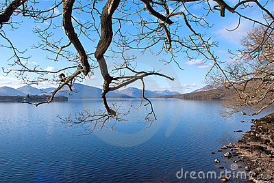 Branches over Loch Lomond