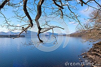 Branches over Loch Lomond