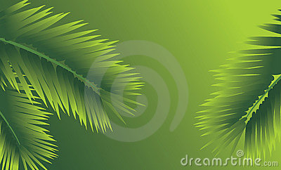 Branches of palm. Abstract background