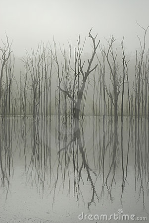 Branches reflect on water