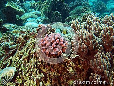 Branches of rigid corals, Vietnam, Nha Trang