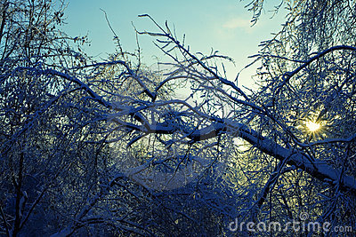 Branches of the trees in the ice