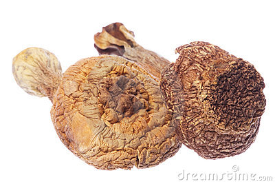Brasil Morel Mushrooms Isolated