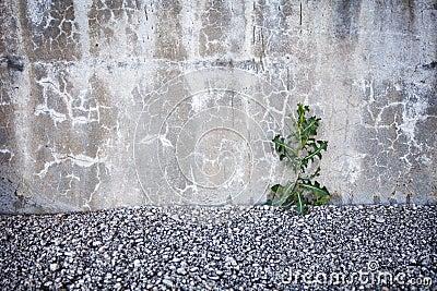 Brave plant