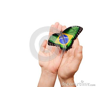 Brazil flag butterfly
