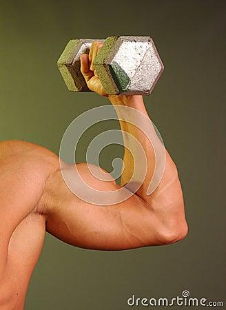 como formar brazos grande y musculosos - Apuntes y Monografías ...
