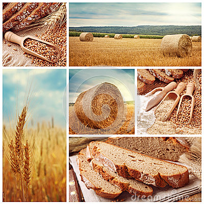 Free Bread And Harvesting Wheat Stock Photography - 25828862
